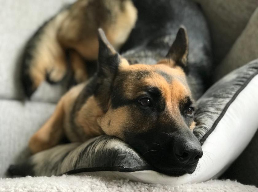 Börja dagen med hund