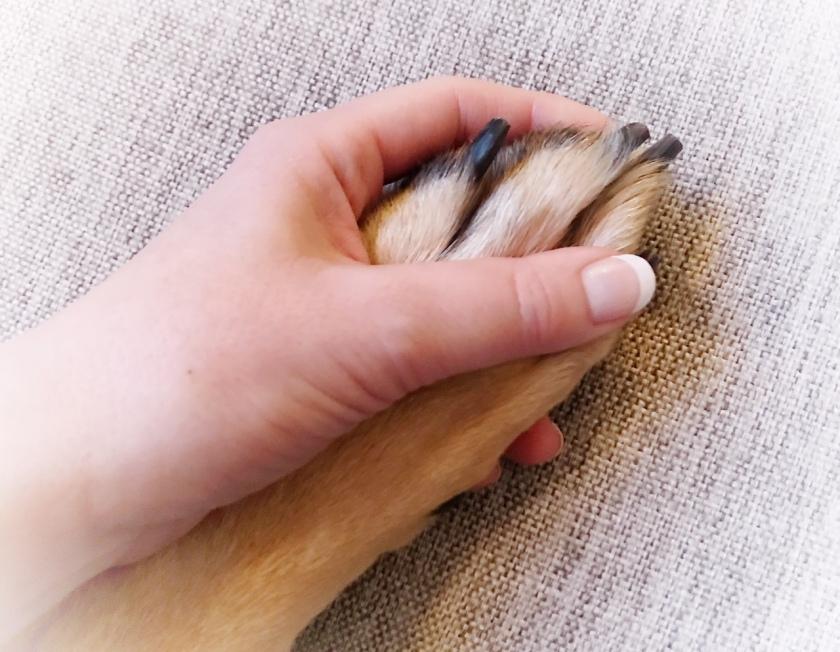 Hur klipper man klorna på hunden